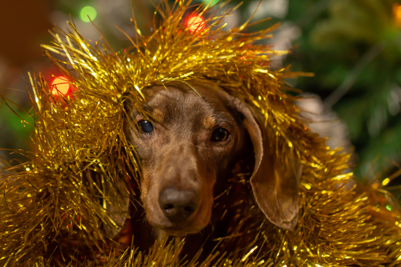 Dog wrapped in tinsel