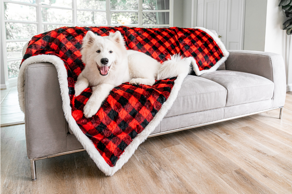 Samoyed Dog on Winter Plaid Pet Blanket