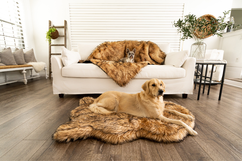 Golden Retriever on Sable Tan Dog Bed and French Bulldog on matching Blanket