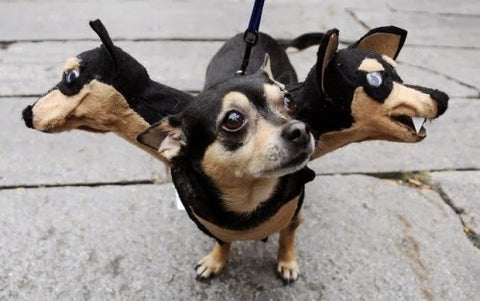 three headed dog costume chihuahua