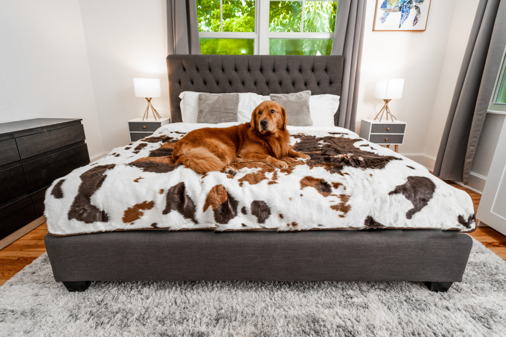 Golden Retriever on King Size Brown Cowhide Blanket
