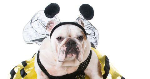 american bull dog bumble bee dog costume
