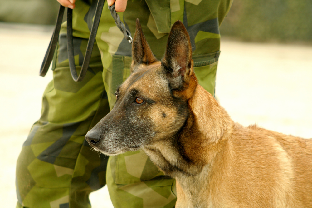 Soldier standing next to German Shepard on leash
