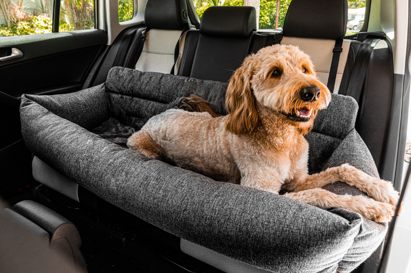 Goldendoodle dog sitting inside pet car seat bed