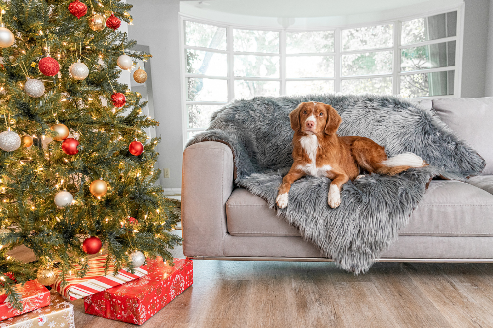 Dog on grey blanket on couch next to Christmas tree