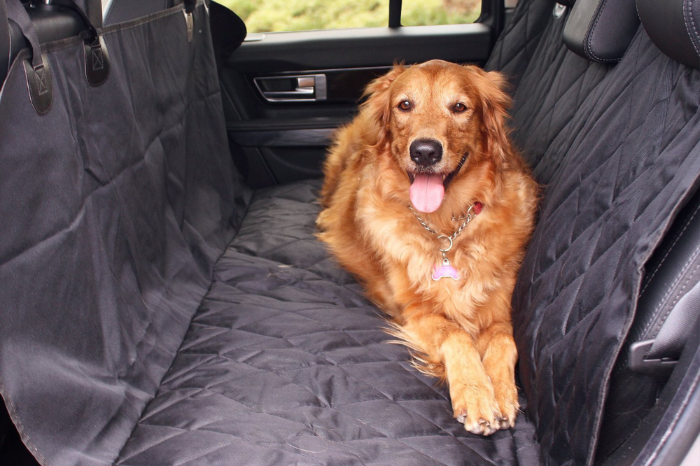 Dog sitting in car on car seat cover