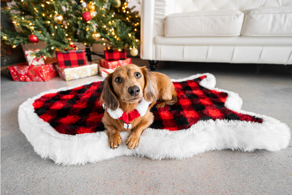 Doxie Dog in front of Christmas Tree