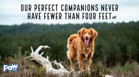Our Perfect Companions Never Have Fewer Than Four Feet