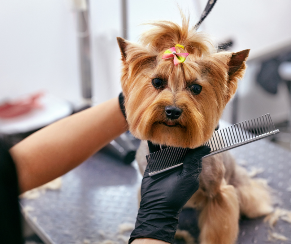 Choosing a dog breed with long hair means heavy maintenance to keep it clean and looking good.