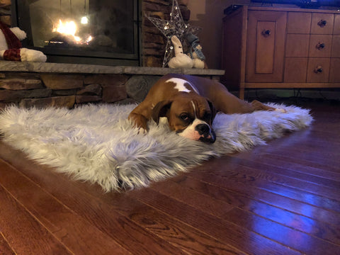 Boxer on PupRug