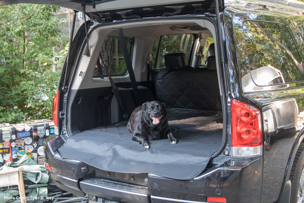 Dog in Cargo Area of SUV vehicle in the woods