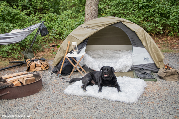 Black Dog sitting on Dog Bed in front of tent in the woods