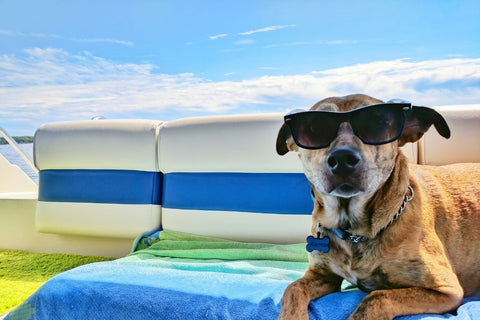 Tips To Keep Your Pet Cool In Hot Weather