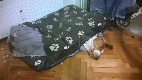 Dog Stuck in Bed