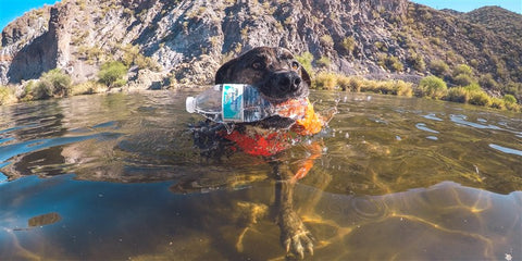 Recycling Dog