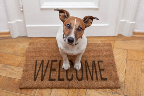 Dog at welcome mat