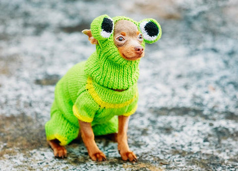 frog dog costume knitted