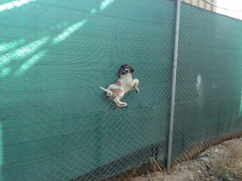Dog Stuck in Fence
