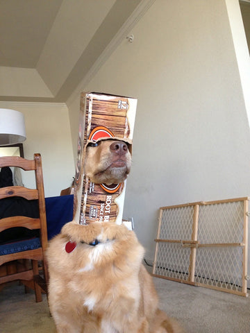 Dog stuck in cereal box