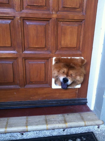 Dog stuck in cat door
