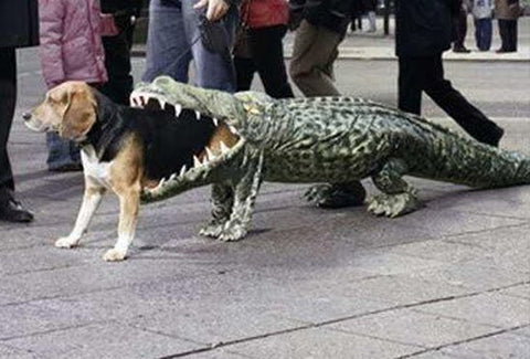 dog costume alligator