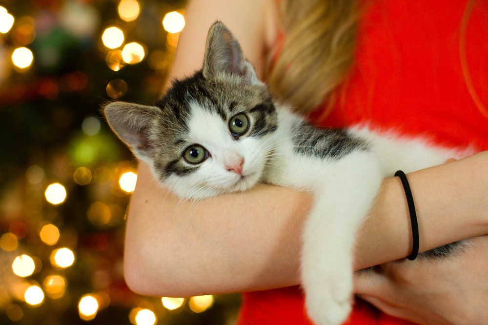 Kitten at Christmas