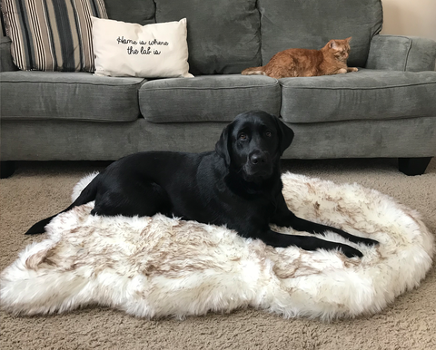 PupRug Faux Fur Memory Foam Dog Bed