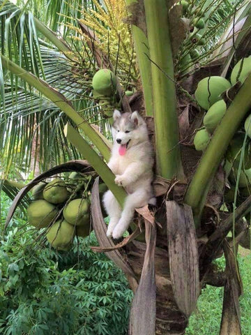 Dog on coconut tree