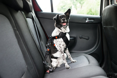 Dog Travel Car
