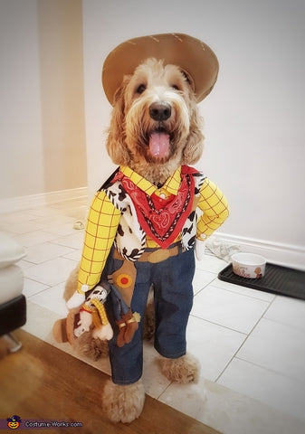 cowboy toy story dog costume