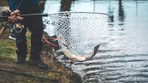 salmon caught in net held over river
