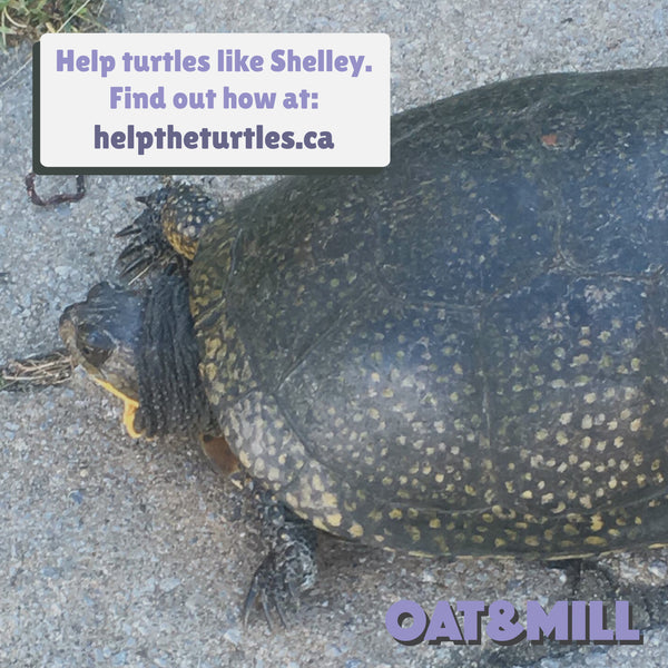 Important Oat Announcement: Turtles are at Risk! How you can help?