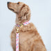 Rose Colored Canvas Leash