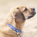 Royal Blue Ocean Collar