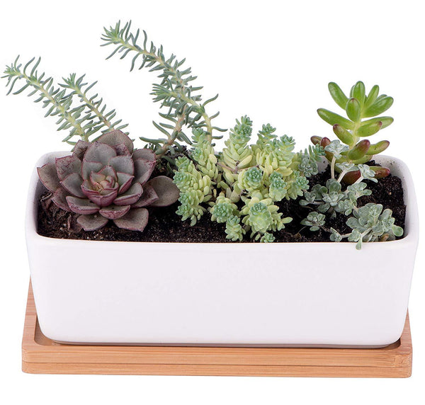 Small White Ceramic Succulent Planter Pot Rectangle With Bamboo Base Starpack Products