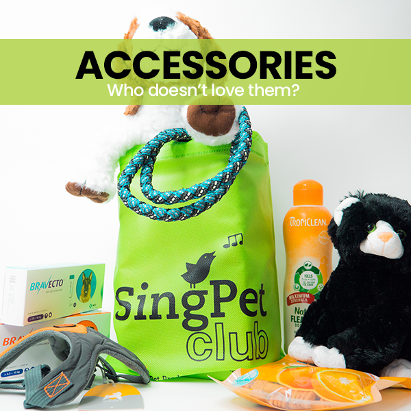 Accessories for your Pets @ Singpet.Com