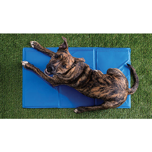 GF Pet Ice Mat Cooling Products For Dogs (Blue) | Singpet.COM