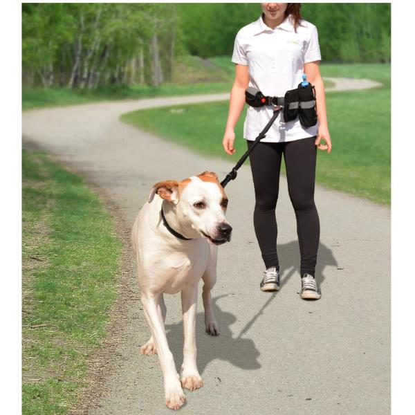 GF Pet Waist Belt & Bungee Leash | SingPet.com