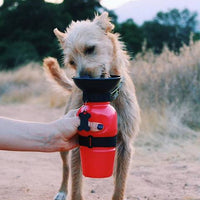 .Highwave Auto Dog Mug recipient de apa albastru