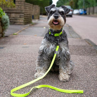 .Zgarda Long Paws Urban Trek Galben Neon