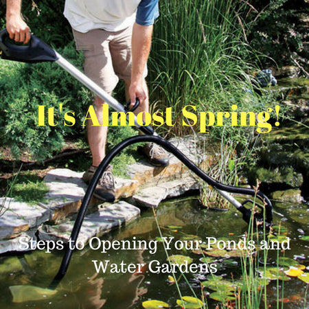 It's Almost Spring! Time to Reopen your Koi Ponds and Water Gardens!