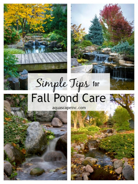 Aquascape's Simple Tips for Fall Pond Care