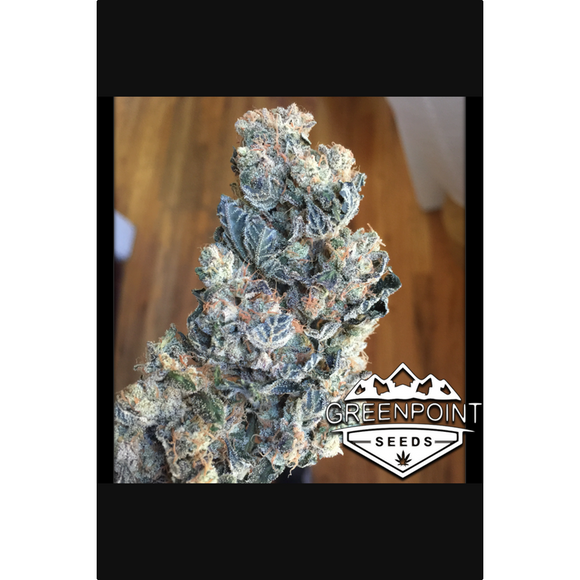 Ace High - Greenpoint Seeds (Lemon G x Stardawg)