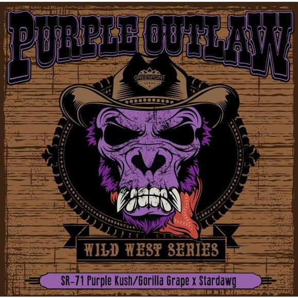 Purple Outlaw - Greenpoint Seeds