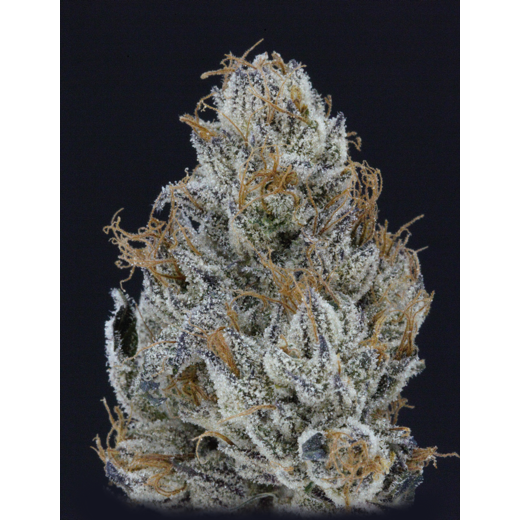 Purple Badlands (Flo x Stardawg) Greenpoint Seeds