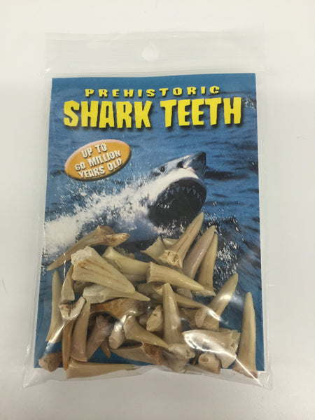 Prehistoric Shark Teeth