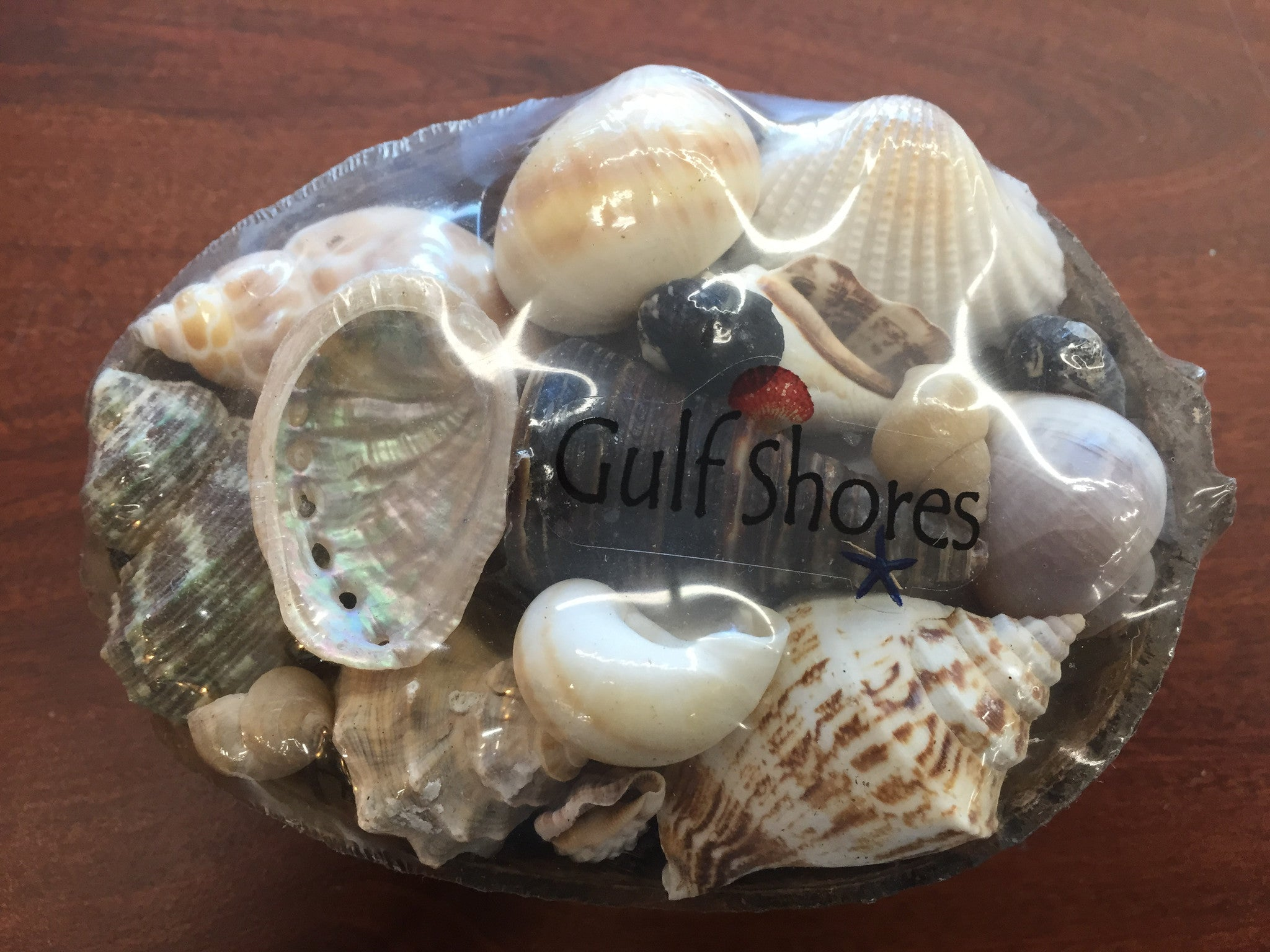 Assorted Shells in Half Coconut