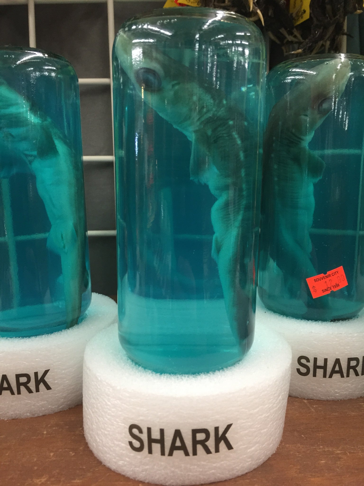 shark in a bottle souvenir city gulf shores