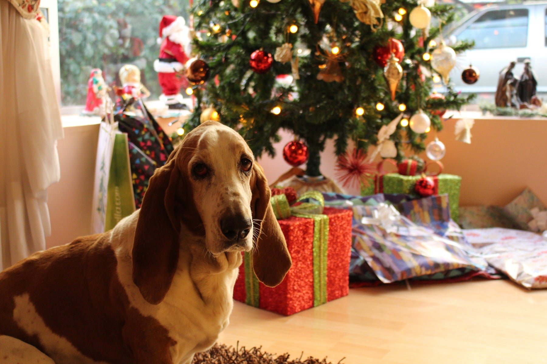 Keeping Your Furry Friends Safe During the Holidays