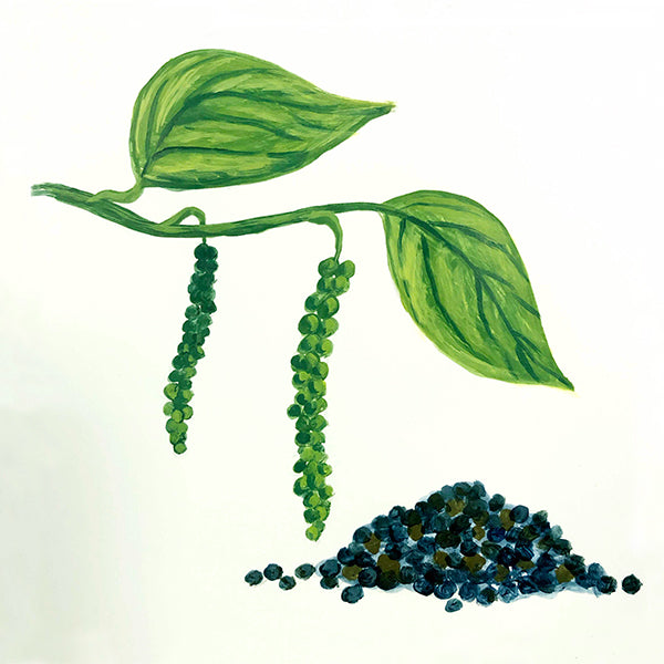 Madagascar Black Peppercorn